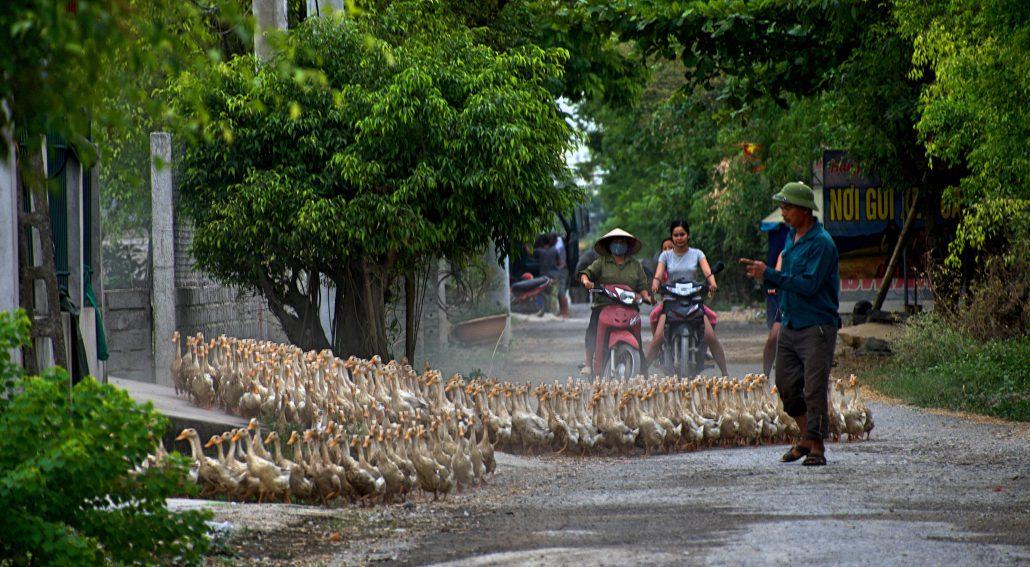 Motorrad kaufen in Vietnam 1