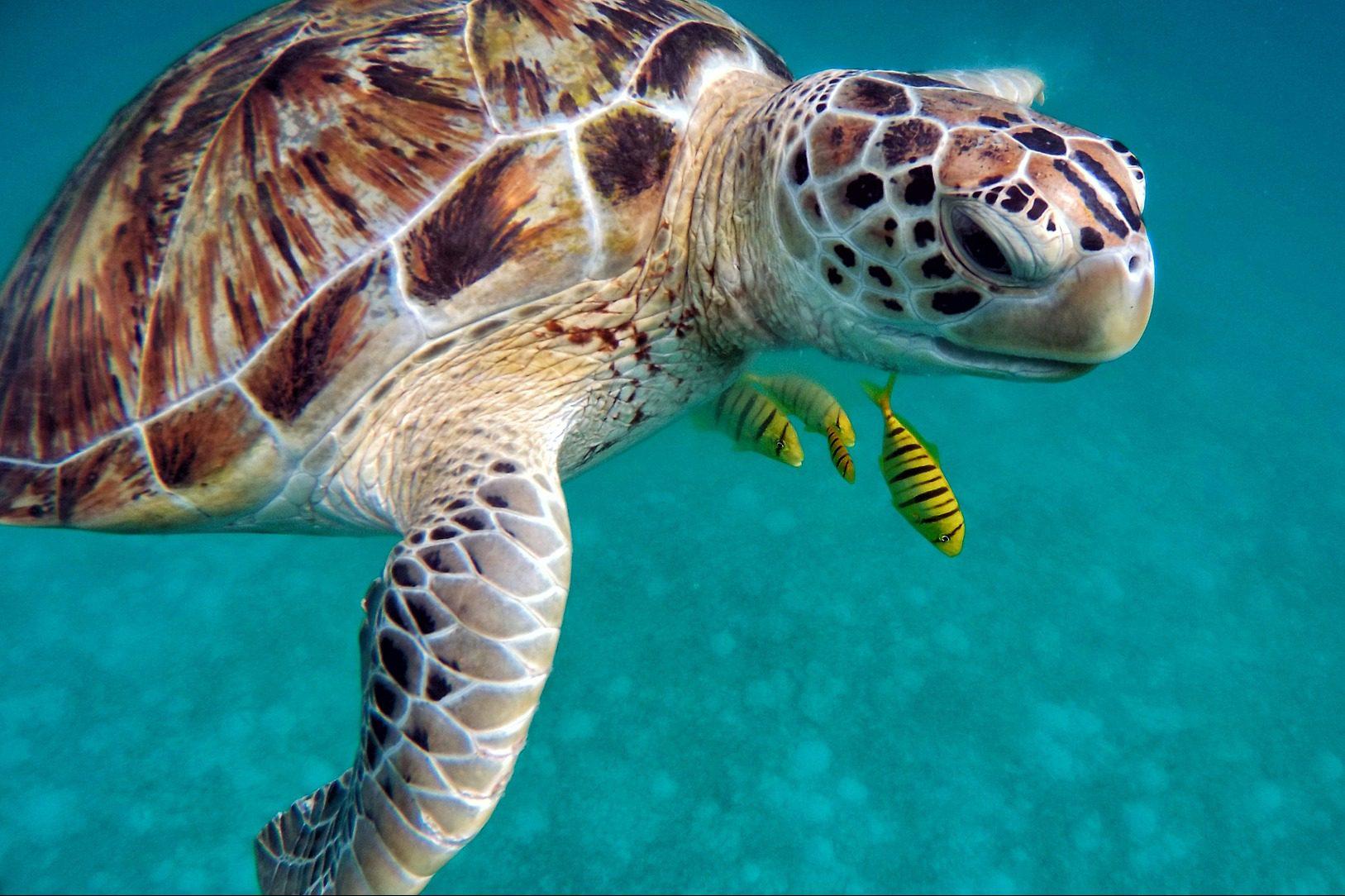 die 7 schönsten inseln Thailands_thailand_koh-tao