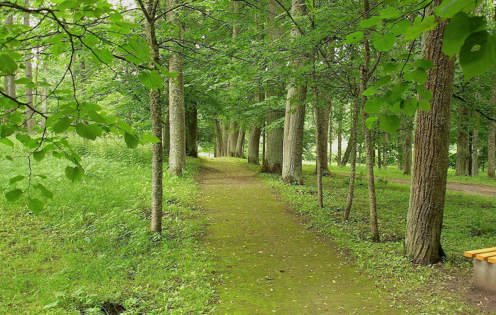 lettland_natur