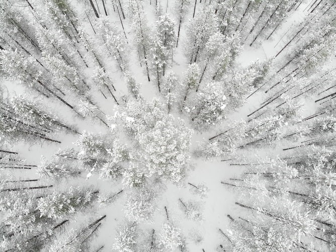 Rovaniemi Winter Wald