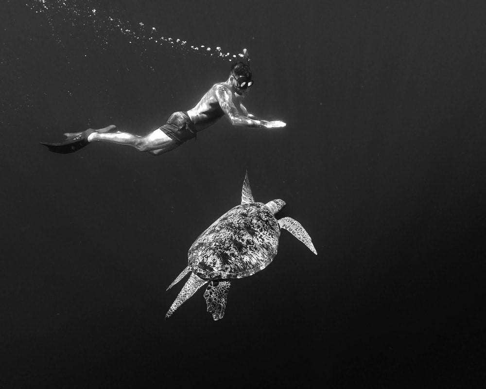 Schorcheln Meeresschildkröte