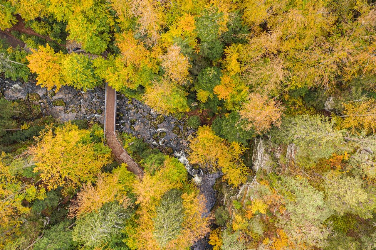 Riesengebirge Wald