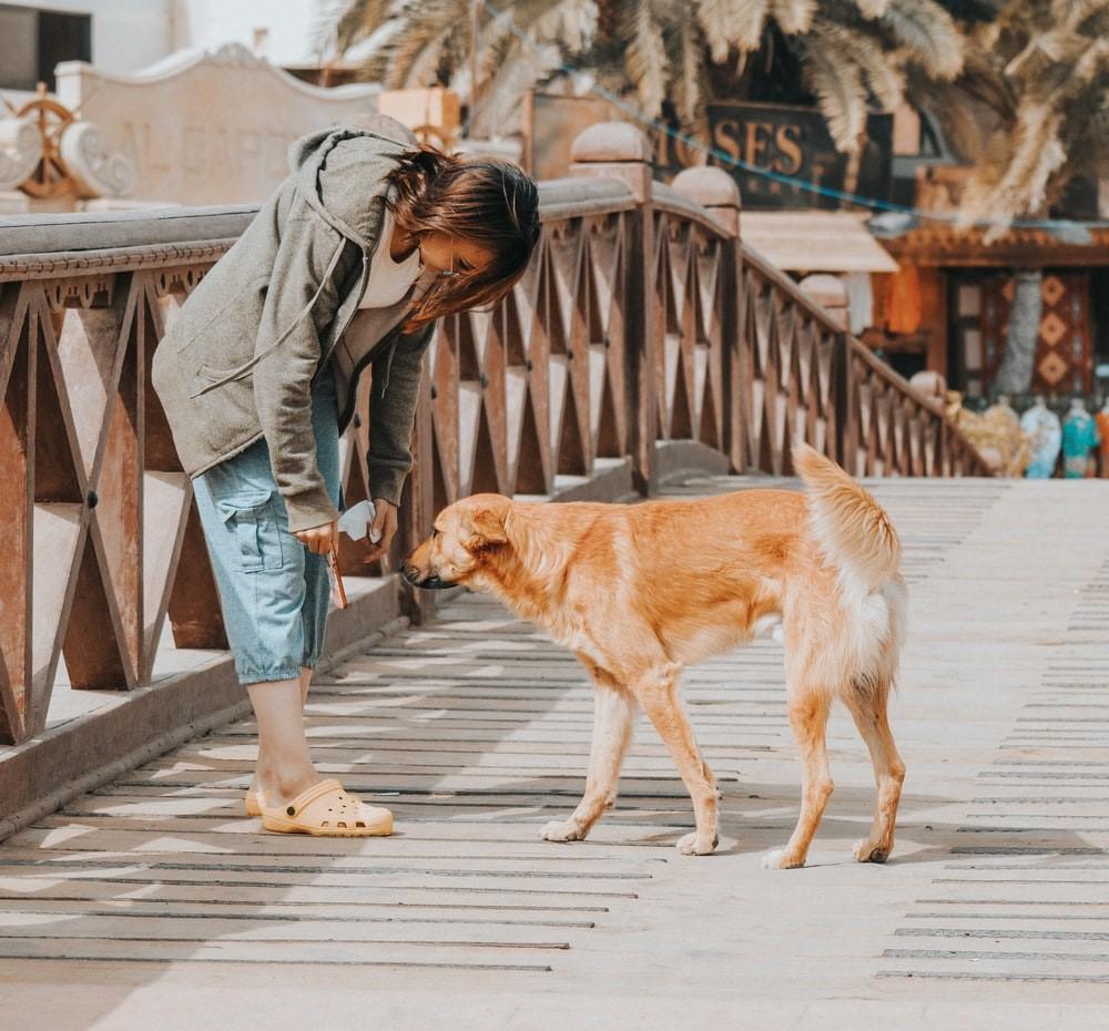 Sinai Dahab Hund
