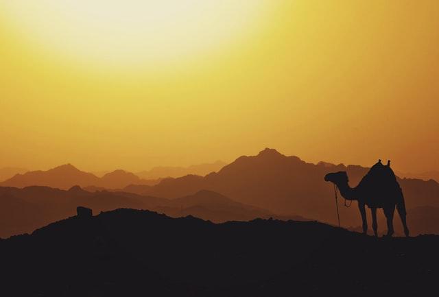 Sinai Kamel