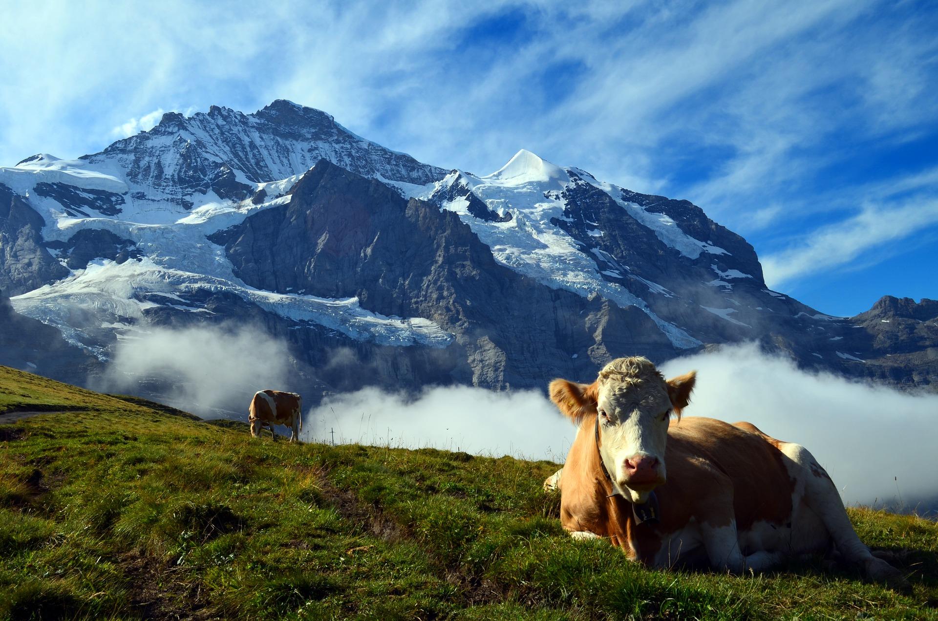 Grindelwald Alm