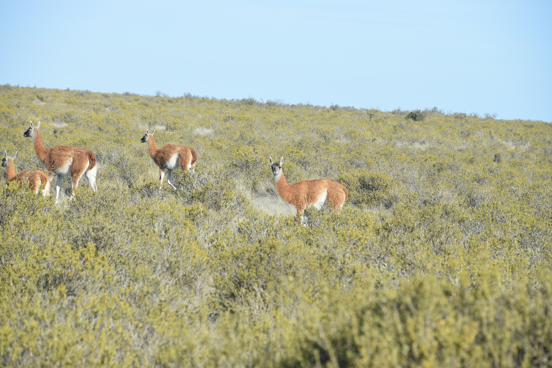 Pampa Argentinien Tiere