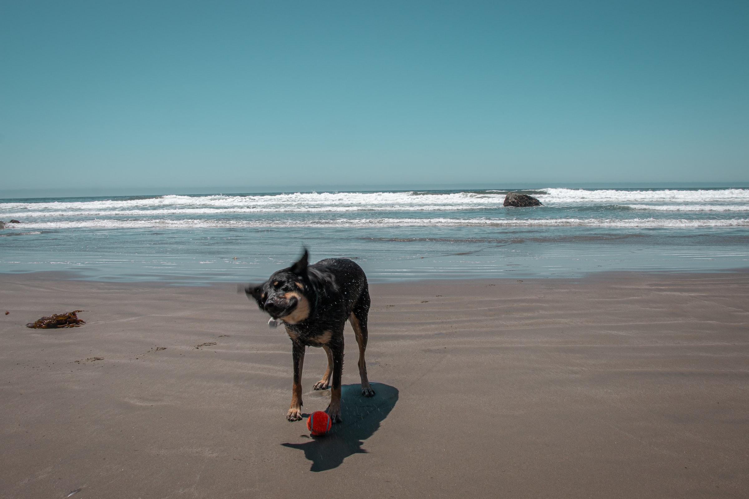 Reisen mit Hund - Hund am Strand