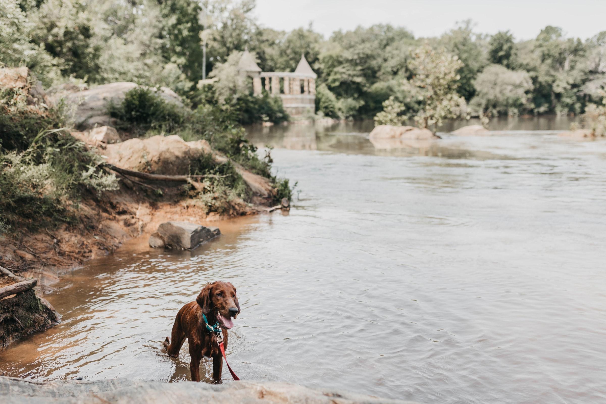 Reisen mit Hund - Hund im Wasser