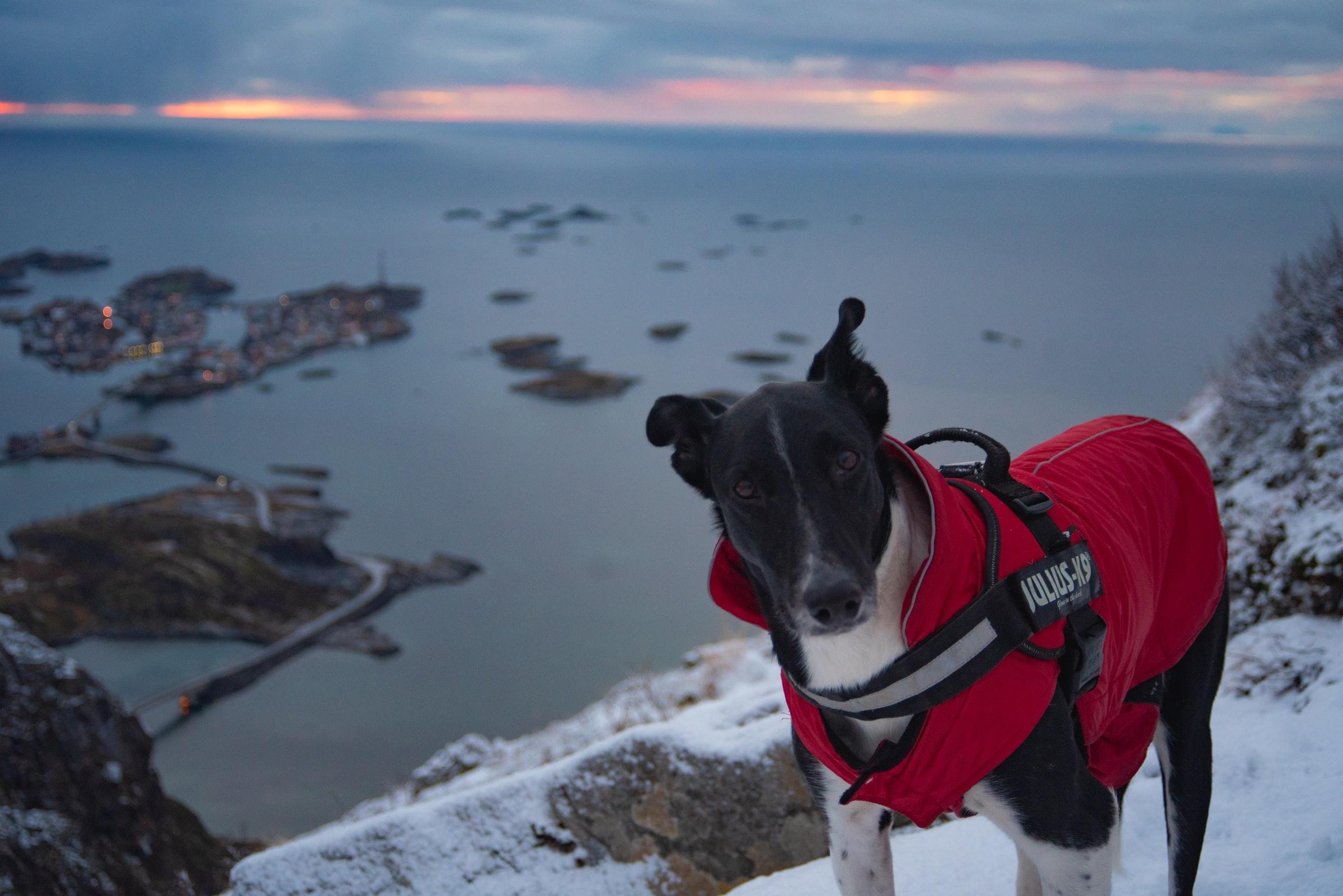 Reisen mit Hund - Hund mit Wärmemantel