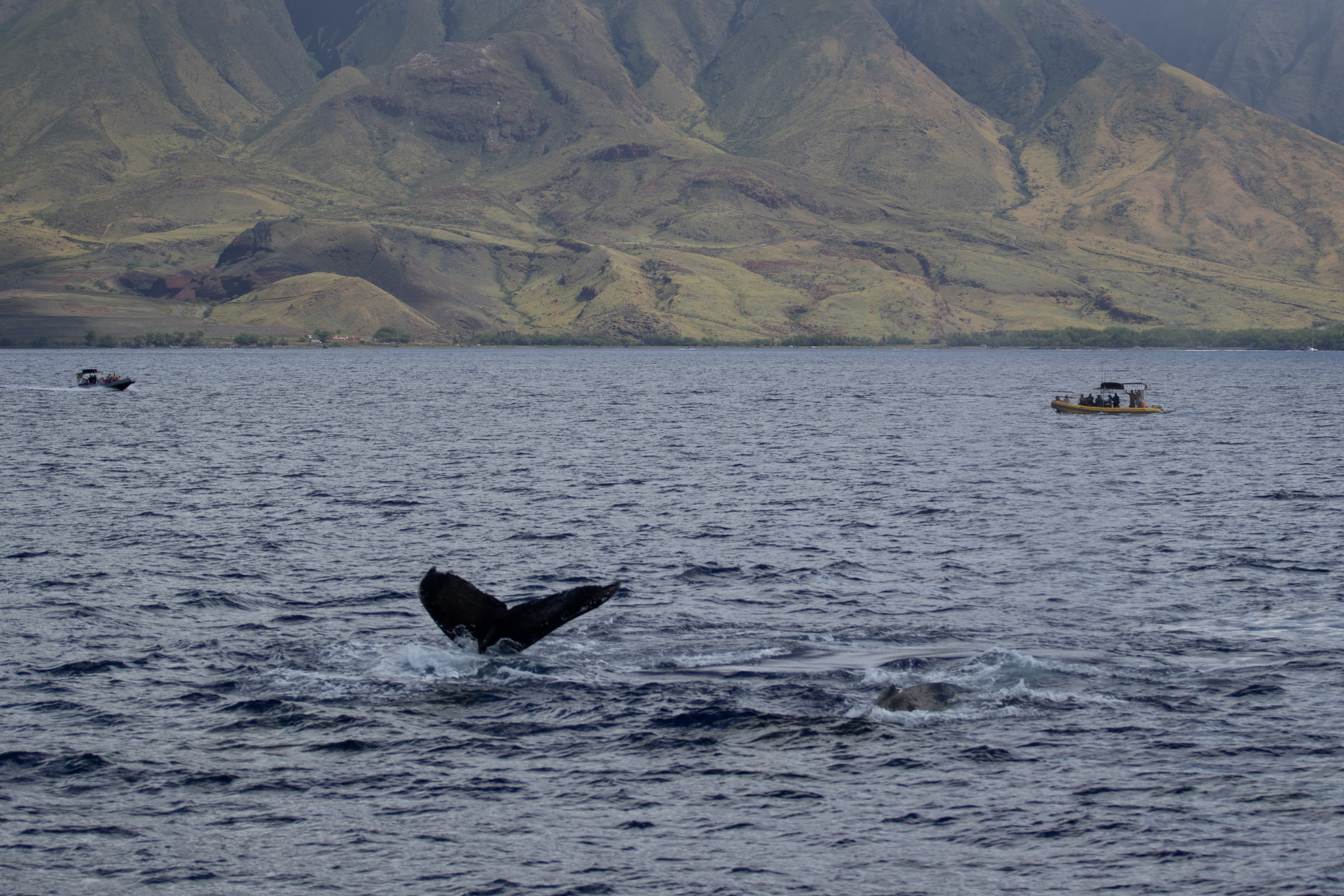 Hawaii - Walfischflosse im Meer