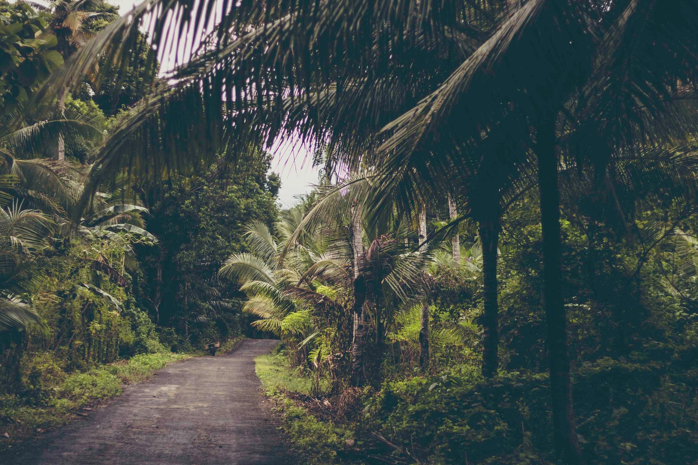 Indonesien Sulawesi - Straße zwischen Bäumen
