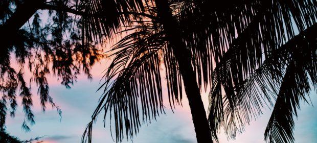 Koh Chang Thailand - Palmen