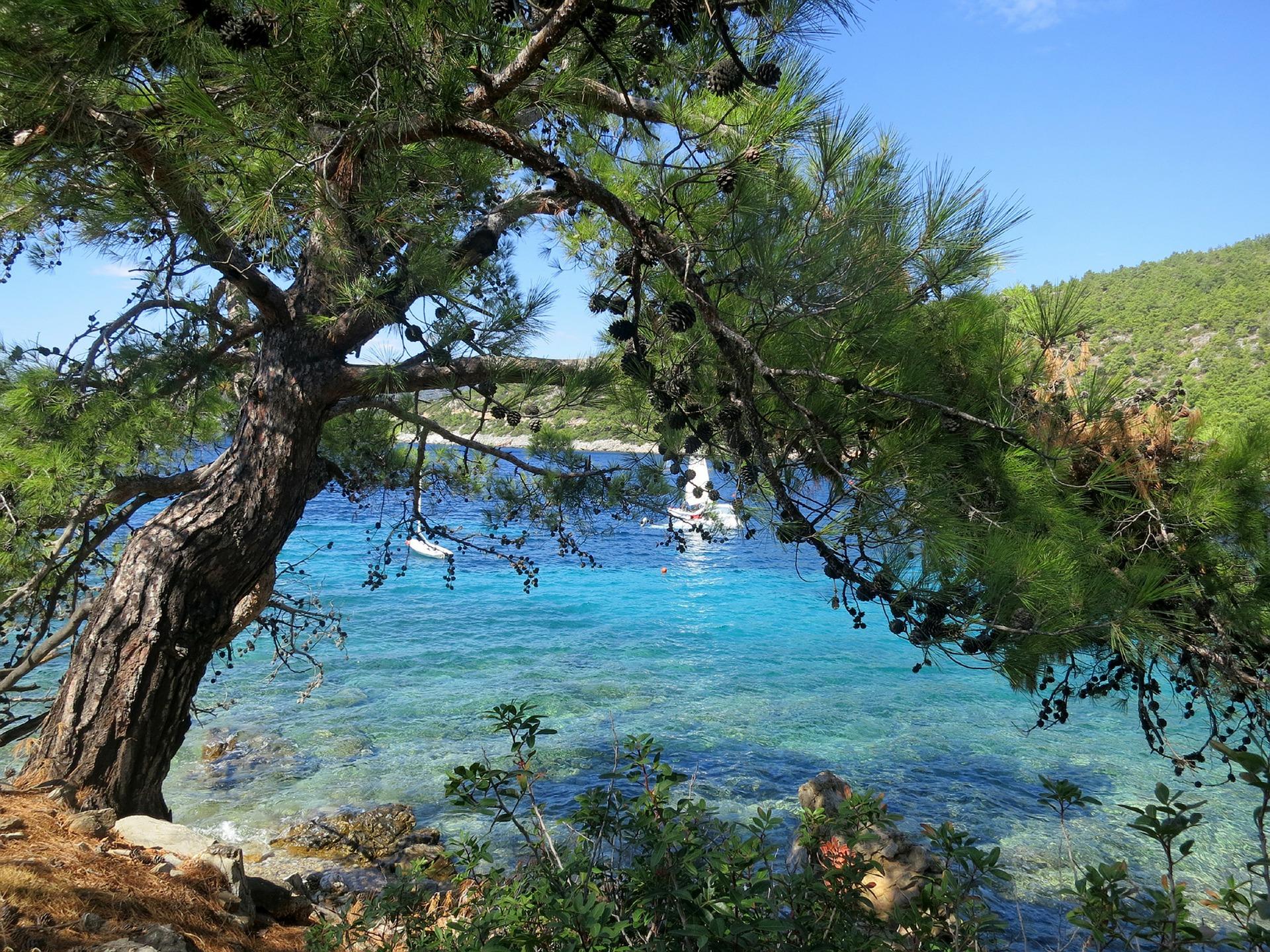 Türkei Bodrum - Baum und türkises Gewässer