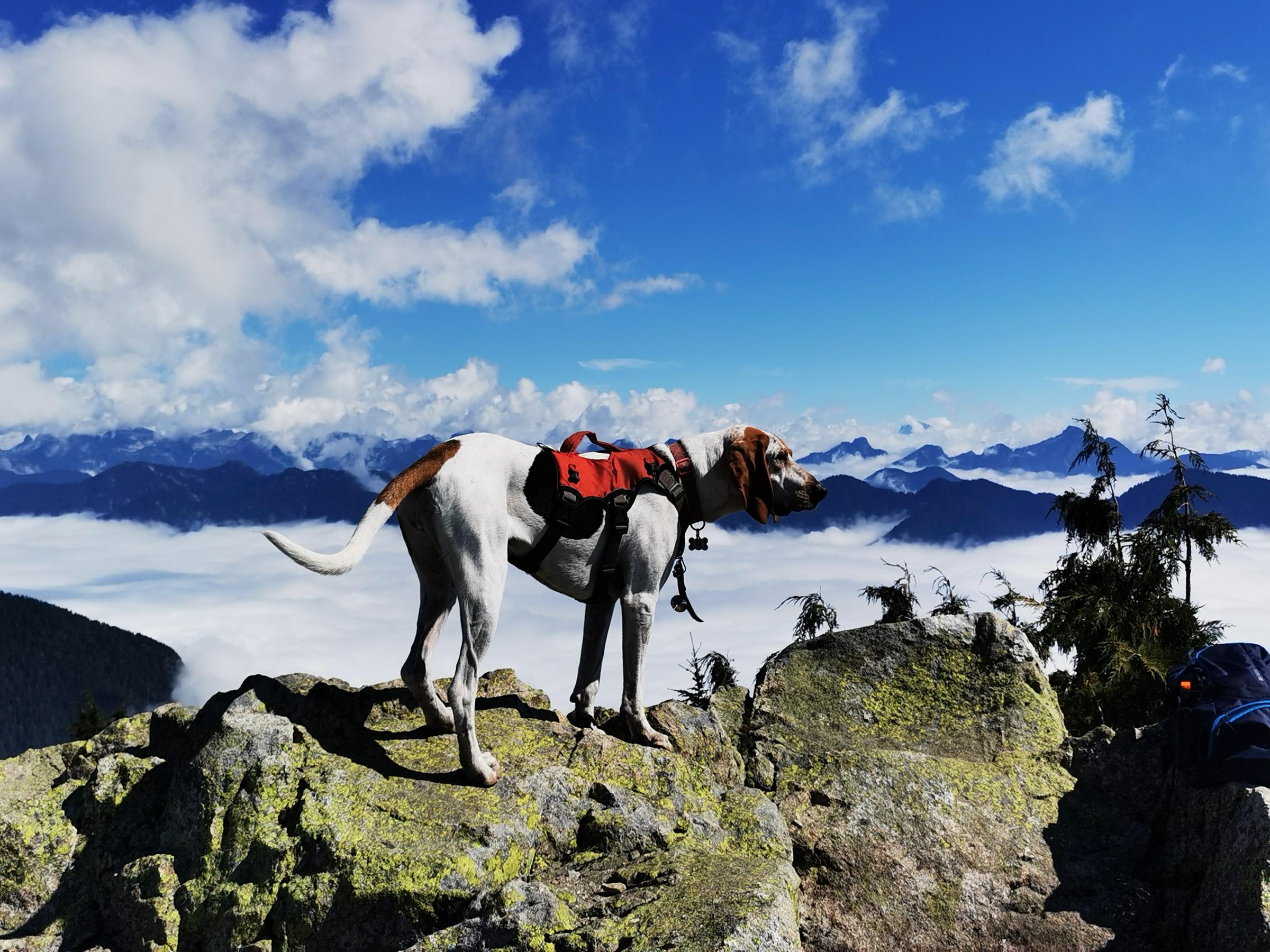 Wandern mit Hund - Berge und Hund