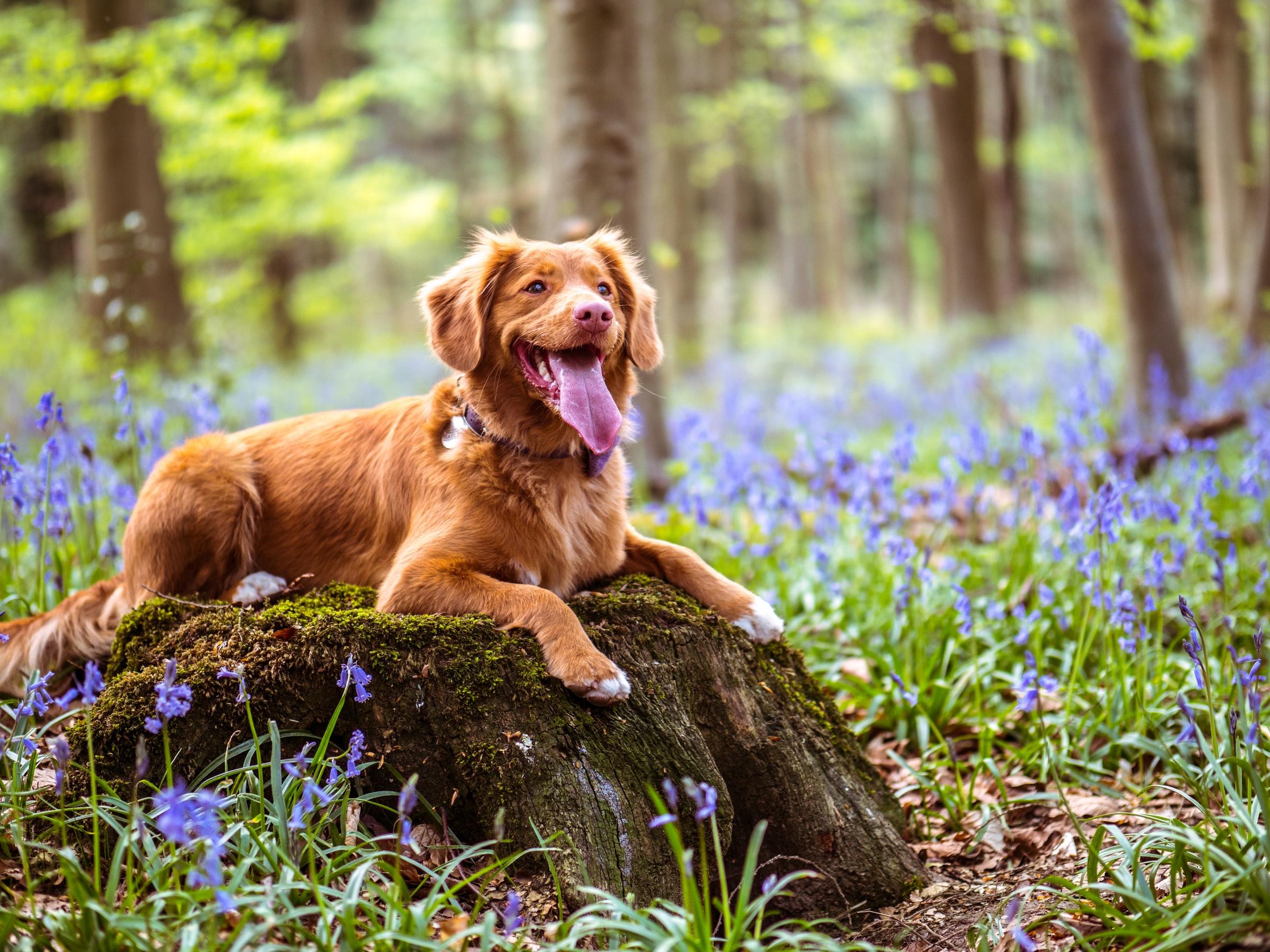 Wandern mit Hund - Hund auf Baumstumpf
