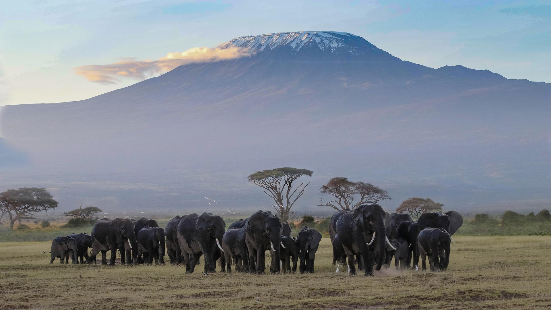 Elefanten im Kilimandscharo Afrika