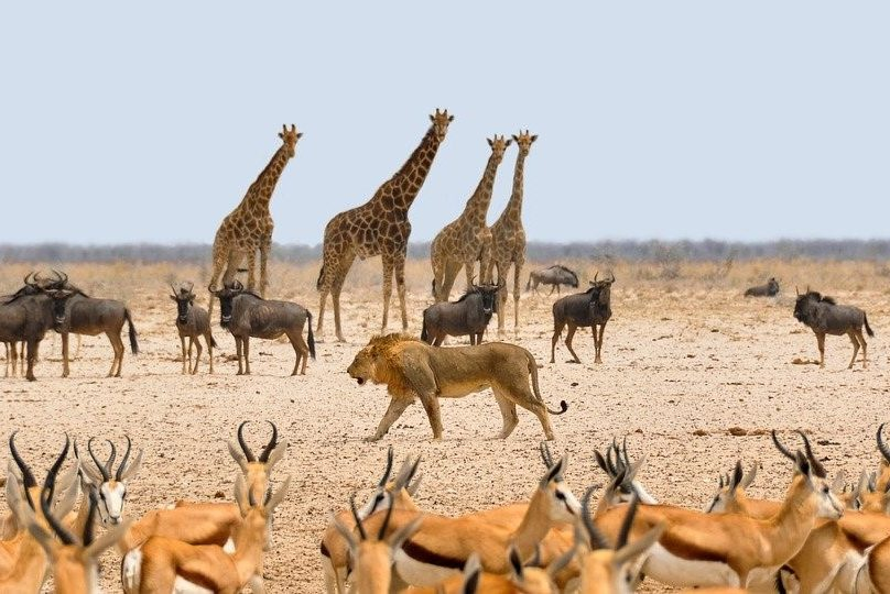 Namibia Natur Tiere