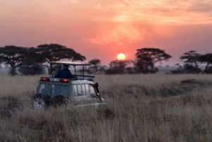 Safari Tansania Serengeti