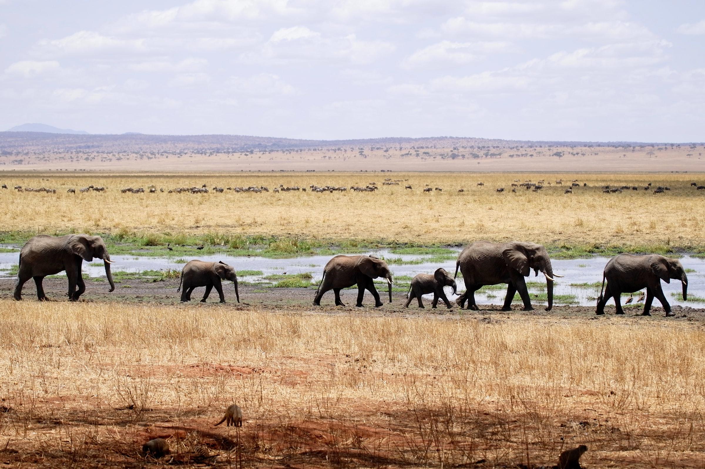 Elefanten Tarangire Safari