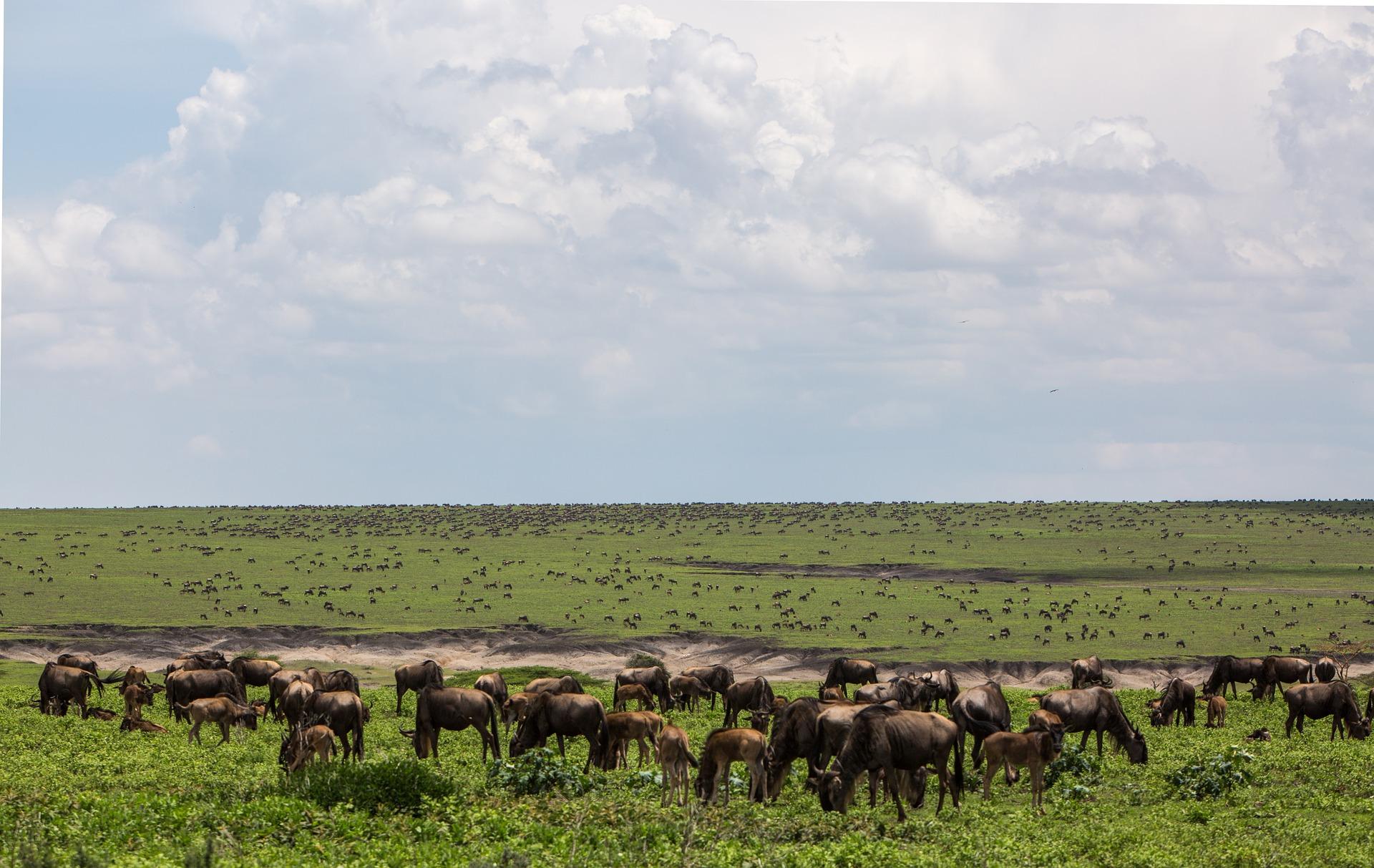 Great Migration Safari Tansania