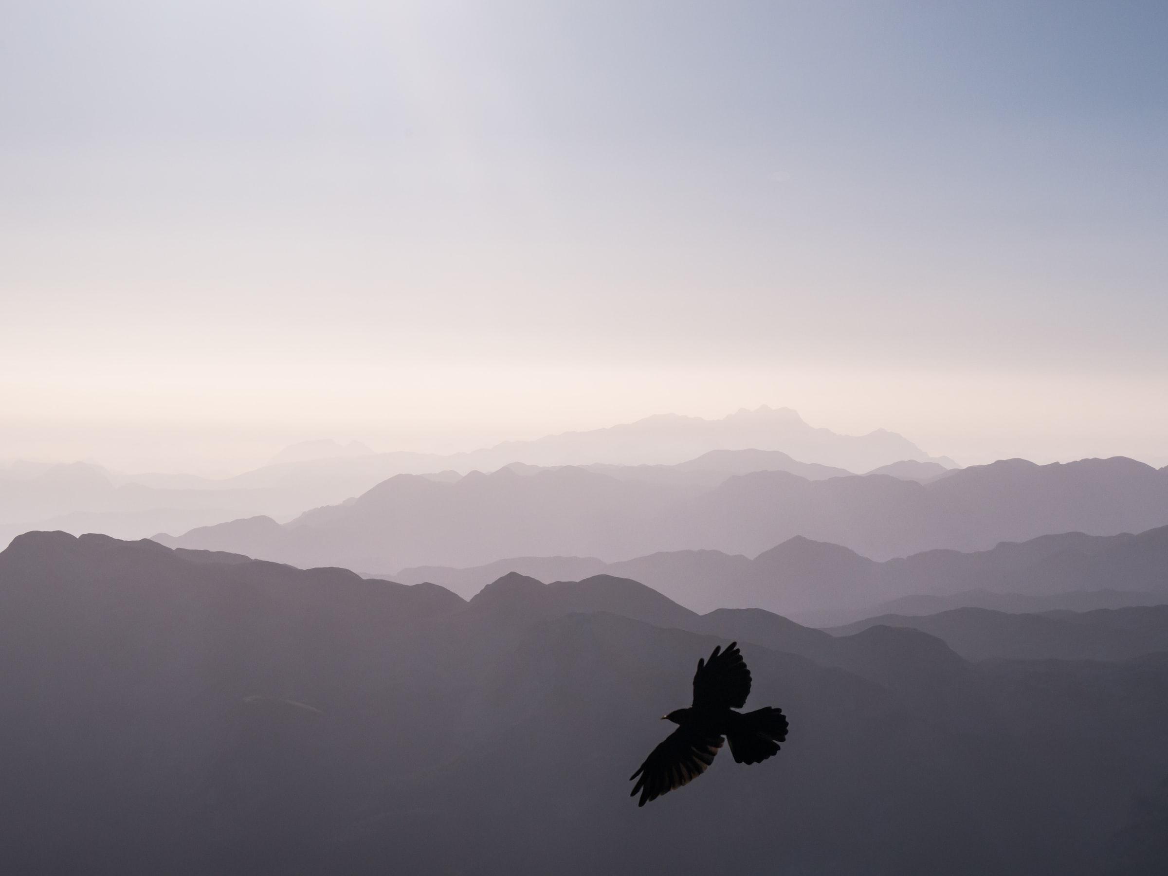 Alpen in Bayern und Silhouette Vogel
