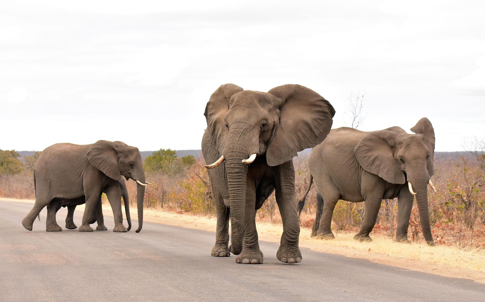 Krüger Nationalpark Elefanten