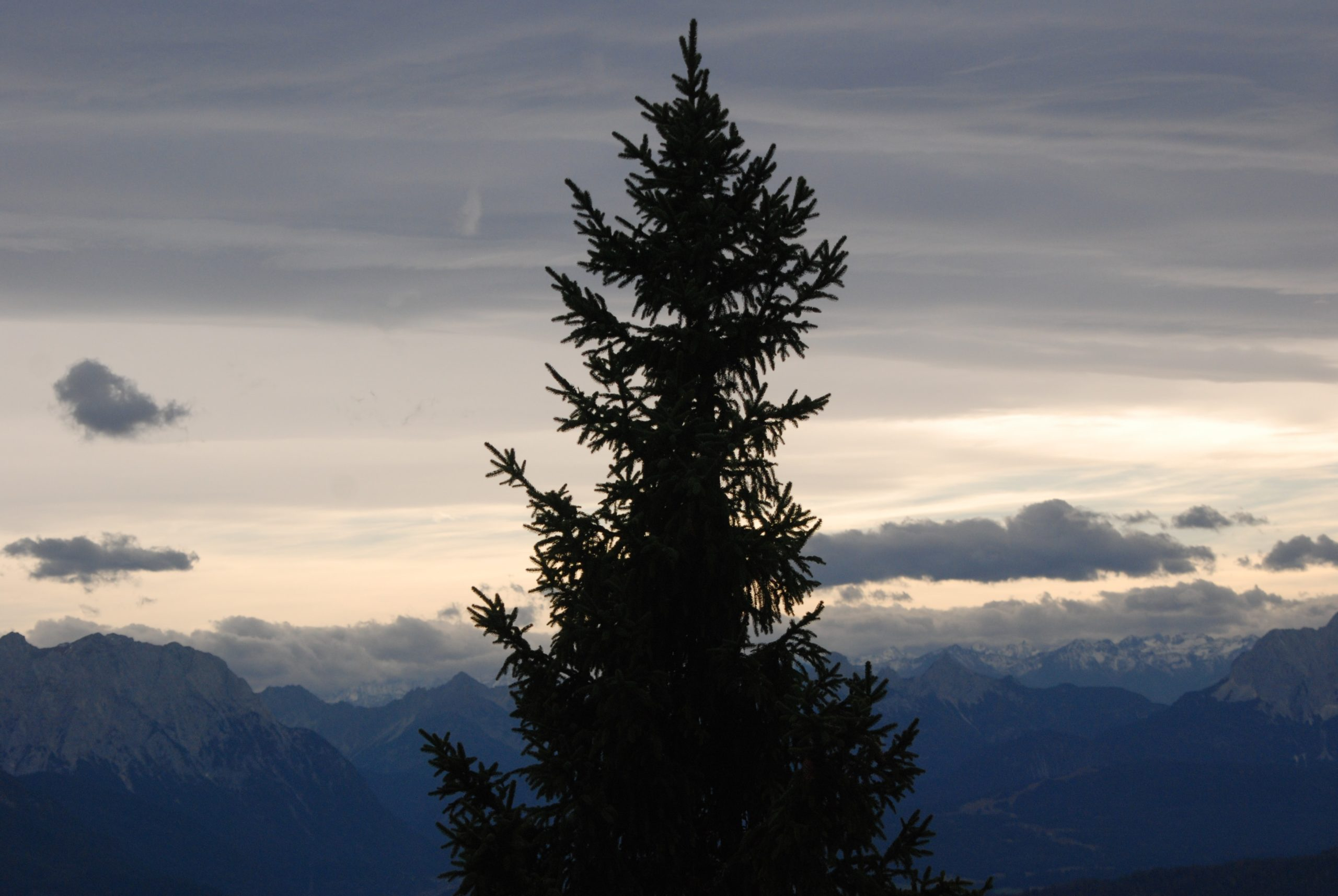 Nadelbaum Alpen in Bayern